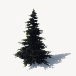 CHRISTMAS TREES are on sale now!!